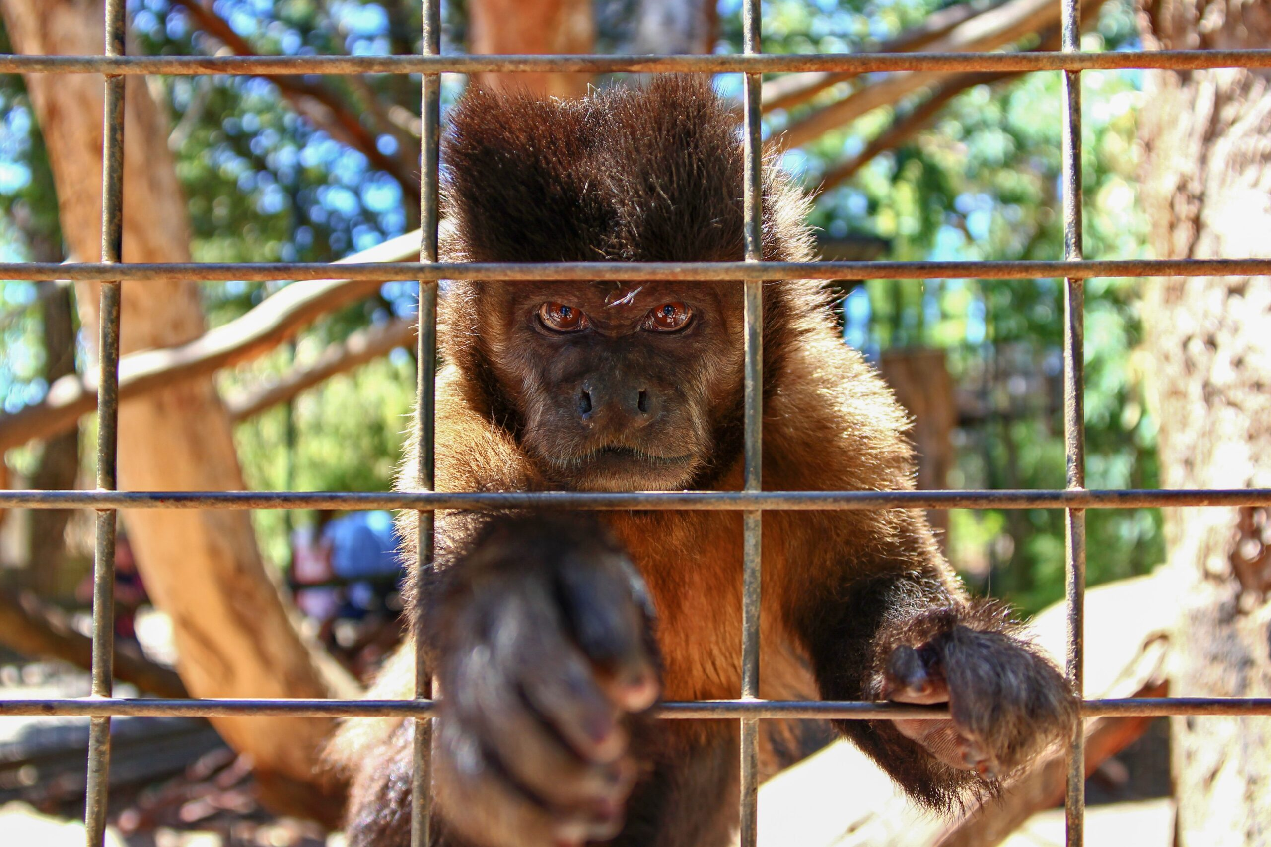 Small monkey on a cage